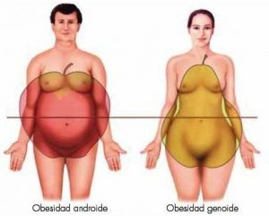 obesidad-genoide-androide